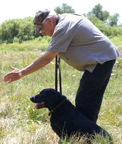 Labrador retriever training private lessons near Milwaukee Wisconsin